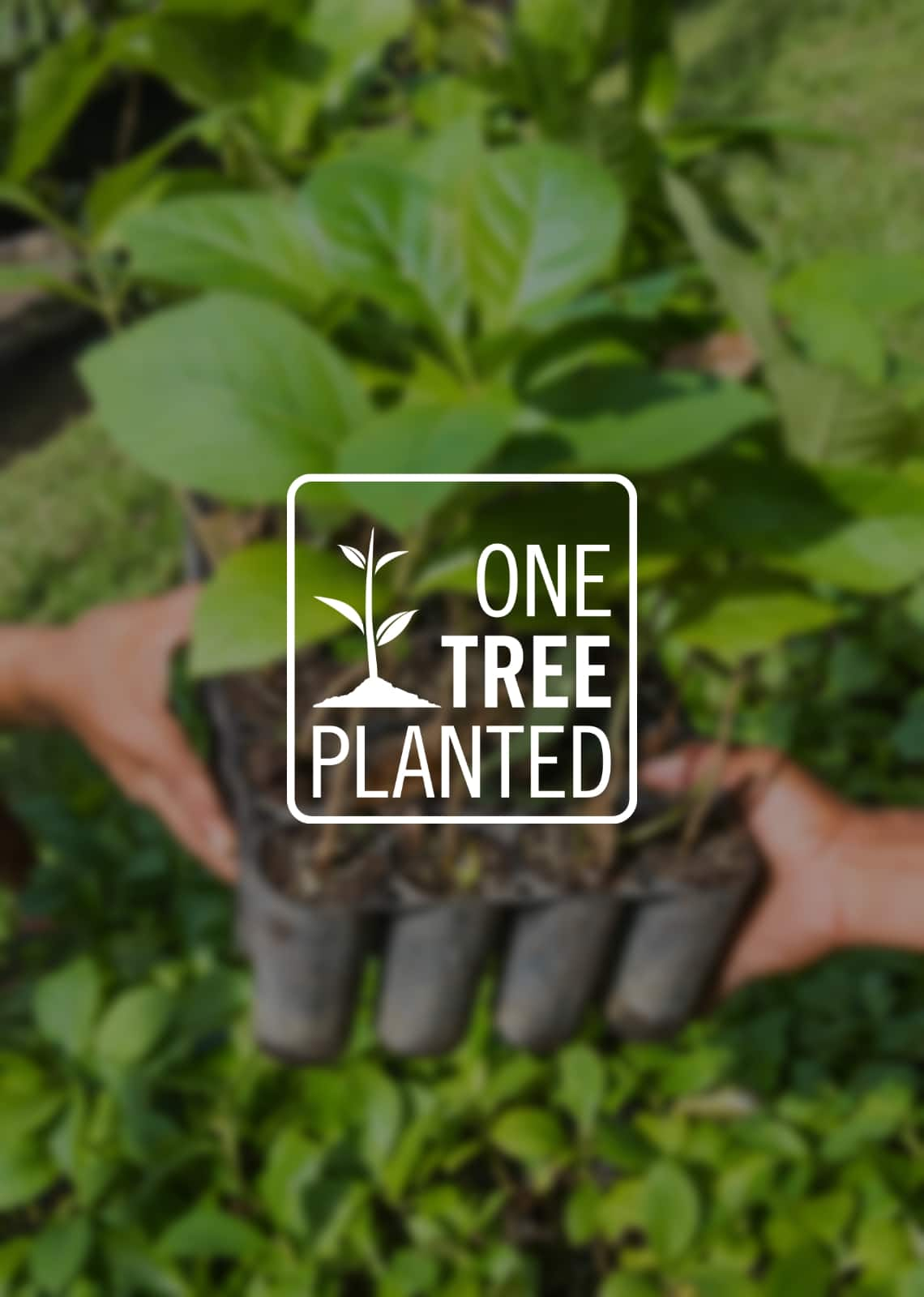 In Partnership with One Tree Planted